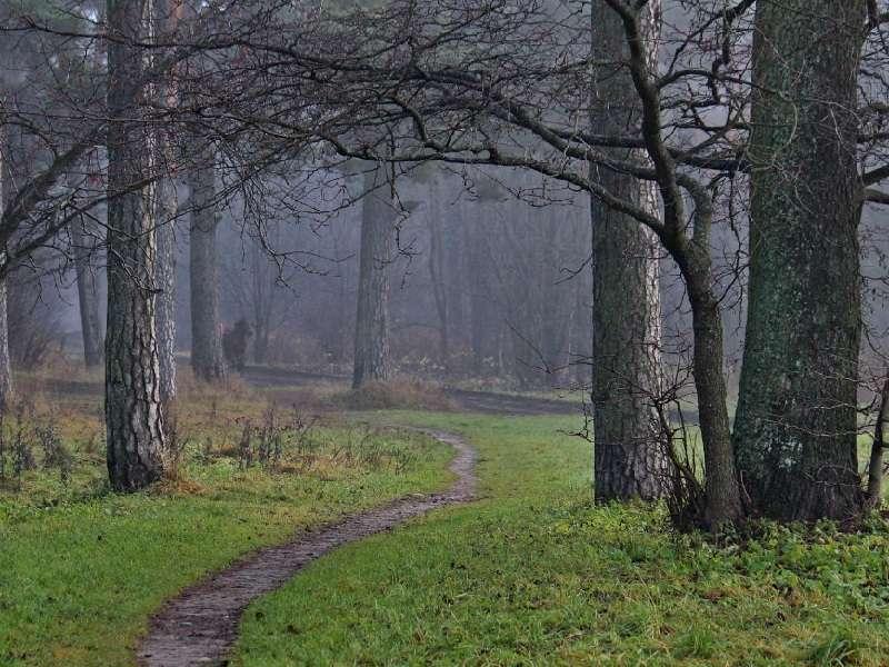 estonia-nature-800-2